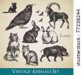 Vector Animals Set   Raven ...