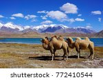 camels at karakul lake ... | Shutterstock . vector #772410544