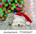 Stock photo kitten and samoyed puppy in red santa hat on a background of the christmas tree 772452637
