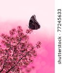 Exotic Butterfly On Pink Flowe...