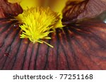 Extreme macro of a beautiful brown Bearded Iris flower. - stock photo