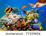 Photo Of A Tropical Fish And...