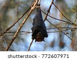 bat sleeping in the middle of... | Shutterstock . vector #772607971