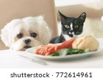 Stock photo cute white dog maltese and cat sitting together on one a chair at the table and begging for food 772614961