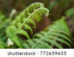 freshness green leaf of fern in