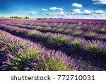 lavender field located in...   Shutterstock . vector #772710031