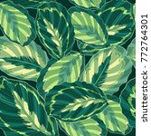 green jungle tropical leaf...   Shutterstock .eps vector #772764301