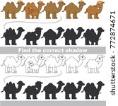 camel to find the correct... | Shutterstock .eps vector #772874671