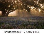 north america  usa  texas. ... | Shutterstock . vector #772891411