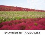 hitachi seaside park  japan  ... | Shutterstock . vector #772904365