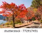 red tree beside the road   Shutterstock . vector #772917451
