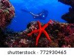 red starfish ocean  | Shutterstock . vector #772930465