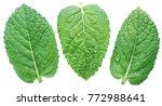 three spearmint or mint leaves... | Shutterstock . vector #772988641