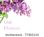 Branch Of Lilac. It Is Isolate...