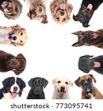 group of dogs | Shutterstock . vector #773095741