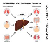 process of detoxification and... | Shutterstock .eps vector #773308924