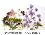 floral background with... | Shutterstock . vector #773310871