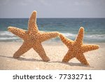 two starfish dancing on the... | Shutterstock . vector #77332711
