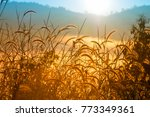 grass flower in the morning... | Shutterstock . vector #773349361
