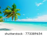 tropical sand beach with palm... | Shutterstock . vector #773389654
