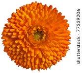 One Orange Flower Head  Of...