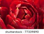 Macro Image Of Beautiful Red...