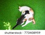 Pretty Calico Cat Sleeping Wit...