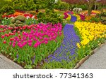 garden of tulips at skagit ... | Shutterstock . vector #77341363