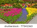 garden of tulips at skagit ... | Shutterstock . vector #77341363