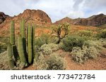 Different Cactus Species In...