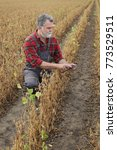 Small photo of Farmer or agronomist examining soybean plant in field, using tablet, ready for harvest after drought
