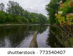calm river in the forest | Shutterstock . vector #773540407