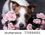 a dog with flowers. pets of st. ... | Shutterstock . vector #773554351