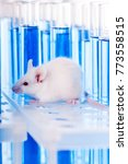 laboratory mouse with test tubes | Shutterstock . vector #773558515