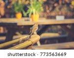 european robin erithacus... | Shutterstock . vector #773563669