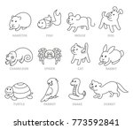 pet shop  set types of pets ... | Shutterstock .eps vector #773592841
