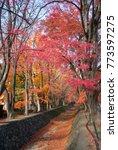 majestic red tree in the beside ...   Shutterstock . vector #773597275
