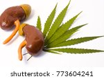 Small photo of Anatomical model of kidney with adrenal lies among green leaves of medical cannabis. Effects of marijuana on kidneys and adrenal, function, use of medical marijuana for patients with kidney diseases