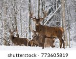 Winter Wildlife Landscape With...