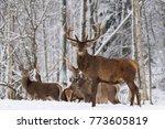 Winter Wildlife Landscape With...