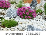 Beautiful Rock Garden...