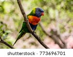 a colorful parrot sits on a... | Shutterstock . vector #773696701