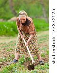 Old Rural Woman Weeding Throug...