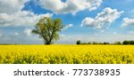 field of rapeseed blossoming ... | Shutterstock . vector #773738935