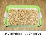 plastic cat tray. toilet for... | Shutterstock . vector #773740501