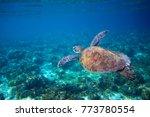 sea turtle in seashore of... | Shutterstock . vector #773780554
