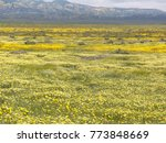 massive wildflower bloom at...   Shutterstock . vector #773848669