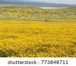 massive wildflower super bloom...   Shutterstock . vector #773848711