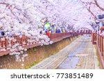 jinhae gunhangje festival... | Shutterstock . vector #773851489
