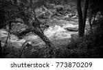 mountain stream and waterfall...   Shutterstock . vector #773870209